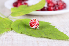 Cowberry sprinkled with sugar on green leaf Royalty Free Stock Image