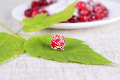 Cowberry sprinkled with sugar on green sheet. Removed close up against a saucer with berries Stock Photo