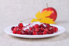 Cowberry in sugar on a linen napkin. Against an apple and a maple leaf removed close up Stock Photography