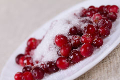 Cowberry in sugar on a plate Stock Image