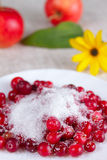 Cowberry in sugar on a white dish Royalty Free Stock Image