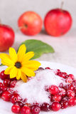 Cowberry in sugar on a white dish with flower Stock Images