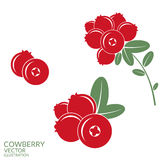 Cowberry Royalty Free Stock Photo