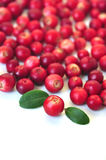 Cowberry Stock Image