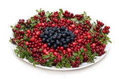 Cowberry and whortleberry on plate Stock Photo