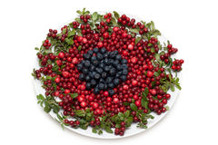 Cowberry and whortleberry on plate Royalty Free Stock Photography