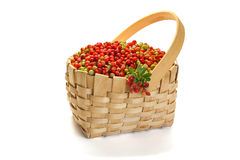 Cowberry in wicker basket  on white background. Berries of cowberry in wicker basket  on white background Royalty Free Stock Image