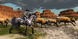 Cowboy 01. A wrangler and his beautiful black horse bring a herd of cattle back to the ranch royalty free stock images
