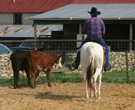 Cowboy. A man on a horse working cattle Royalty Free Stock Photography
