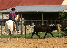 Cowboy. A man on a paint horse works a black cow against the fence Royalty Free Stock Images