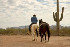 Cowboy. On horseback leading another horse out into the desert stock photo