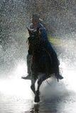Cowboy. A cowboy runs his horse through a mountain stream Royalty Free Stock Image