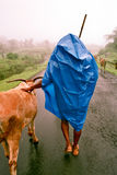 Cowboy. Picture has been taken near Pune city during heavy monsoon Royalty Free Stock Photo