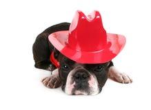 Cowboy Royalty Free Stock Photography