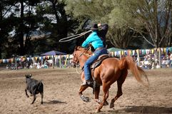 Cowboy. Roping event royalty free stock image