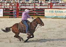 Cowboy in Action. Homestead, Fl. Rodeo Competition January 2009 royalty free stock images