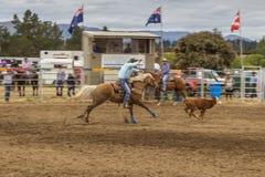 Cowboy auf einem Pferd, das ein Kalb am Rodeoshowwettbewerb fängt lizenzfreie stockfotografie