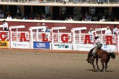 Cowboy auf sträubendem wildem Pferd Stockfotografie