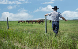 Cowboy avec le chapeau de cowboy noir se penchant contre la barrière regardant fixement ses chevaux image stock