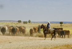 Cowboy avec le téléphone portable Images libres de droits