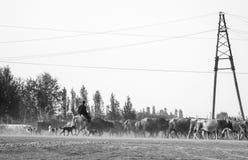 Cowboy in Azerbaijan stock photo