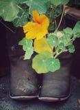 Cowboy Boot Flowers Fotografia Stock Libera da Diritti