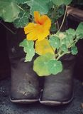 Cowboy Boot Flowers Royalty Free Stock Photography