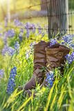 Cowboy boots in Texas bluebonnets. Next to a barbed wire fence. Sunny spring day royalty free stock image