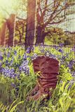 Cowboy boots in Texas bluebonnets. Next to a barbed wire fence. Sunny spring day stock photos