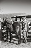 Cowboy brasiliano con il mulo immagine stock libera da diritti