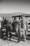 Cowboy brésilien avec la mule Image libre de droits