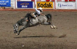 Cowboy on bucking bronco Stock Photos