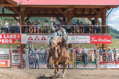 Cowboy on bucking horse during saddle bronc competition at rodeo. Williams Lake, British Columbia/Canada - July 2, 2016: cowboy fights to stay on bucking horse Stock Image