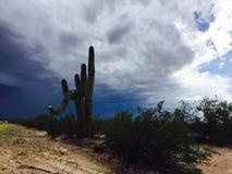 Cowboy Cactus Arkivbild