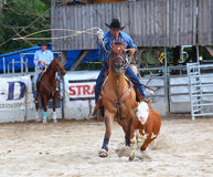The Cowboy in a Calf roping competition. Royalty Free Stock Photography