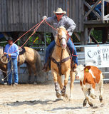 The Cowboy in a Calf roping competition. Stock Image