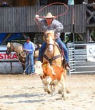 The Cowboy in a Calf roping competition. Unidentified Cowboy Participant in a Calf roping competition at The International Rodeo Show Strabag Prorodeo Tour on Royalty Free Stock Images
