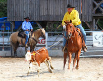 The Cowboy in a Calf roping competition. Royalty Free Stock Image