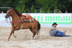 The Cowboy in a Calf roping competition. Royalty Free Stock Photos