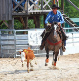The Cowboy in a Calf roping competition. Stock Images