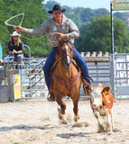 The Cowboy in a Calf roping competition. Stock Photography