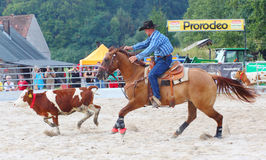 The cowboy in a Calf roping competition. Stock Photo