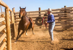 Cowboy Catching Horse dans le corral Photos libres de droits
