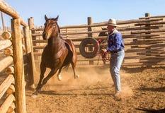 Cowboy Catching Horse nel recinto per bestiame Fotografie Stock Libere da Diritti