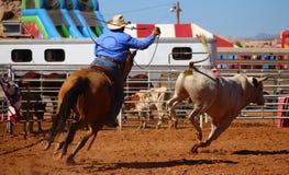 A cowboy & bull Stock Photo