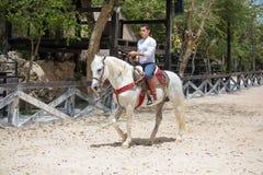 Cowboy che lavora con un giovane cavallo Fotografia Stock