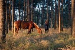 Cowboy con un cavallo Fotografia Stock Libera da Diritti
