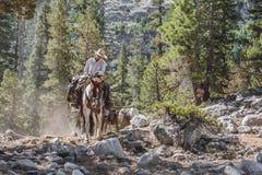 Cowboy da montanha Fotos de Stock