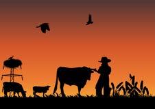 Cowboy dans le domaine Photographie stock