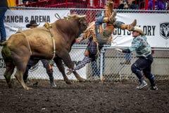 Cowboy de thows de Taureau Photographie stock libre de droits